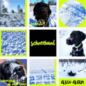 Read more about the article Ein Schneehund – was sonst?